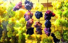 hanging grapes