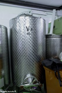 producing vine Cinque Terre