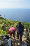 vineyard Volastra
