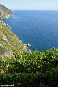 vineyards Possa