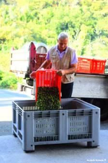 how to prepare olive oil Liguria