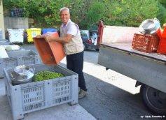 making oil in Liguria 5