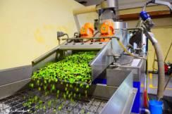 olive oil proceeding