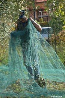olives inside nets