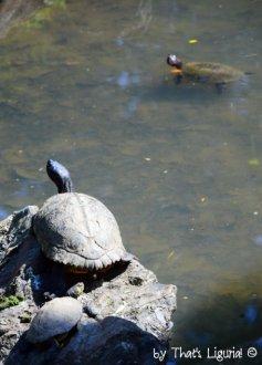turtles Arenzano