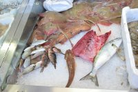 fresh fish Lerici