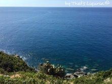 harvest time in Cinque Terre