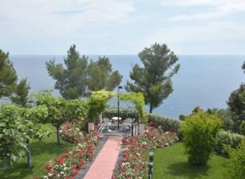 garden Aurelia