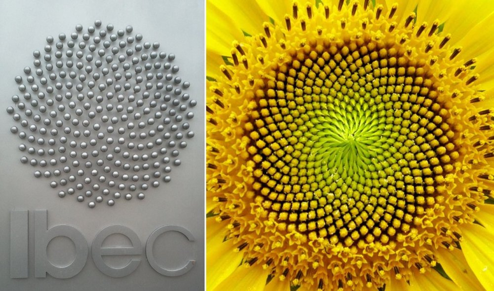 medium resolution of ibec sunflower