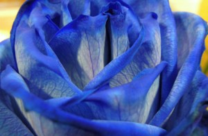 Blue Flower closeup