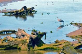 Bird in the water