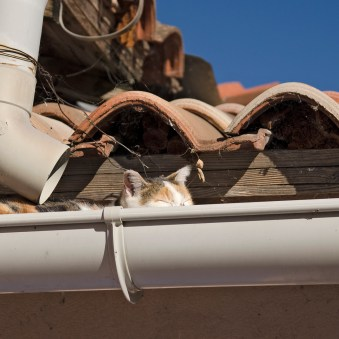 cat sleeping in the gutter