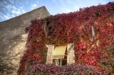 Amazing vine colours, Gordes