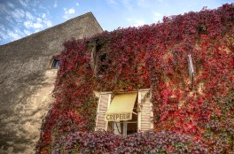 Amazing vine colours, Gordes
