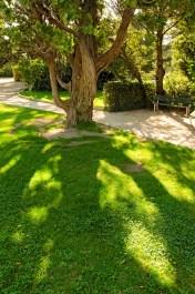 Tree near the palais des papes