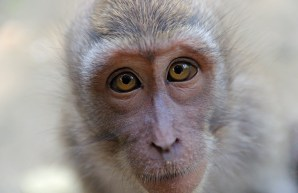 closeup of monkey's face