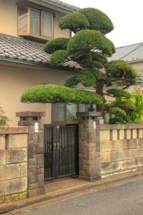 Manicured Tree in front of Tokyo home