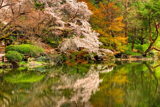 Lone Cherry Tree by the Water