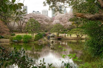 City view with Shinjuku buildings and Cherry Blossoms