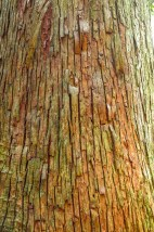 Closeup of Tree Bark texture