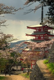 Shiogama shrine pagoda with cherry blossoms