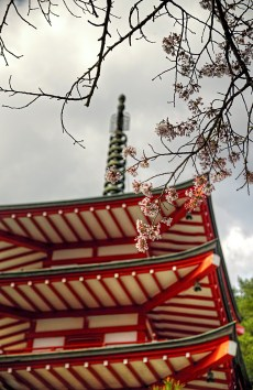 Closeup of cherry blossoms and top of Pagoda
