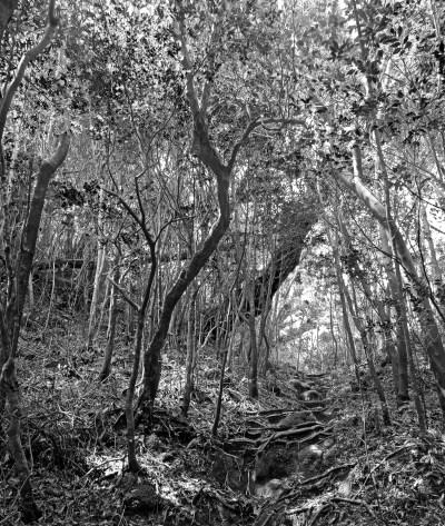 Black and white photo of a hiking traiil on Yakushima Island, Japan