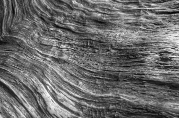 closeup photo of wood grain on Yakushima island, Japan