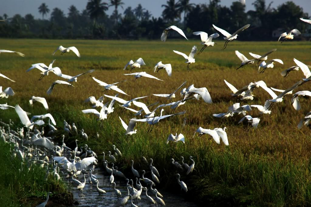 Kumarakom - Top 10 Places To Visit In Kerala