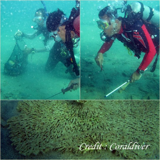 Underwater Clean-up