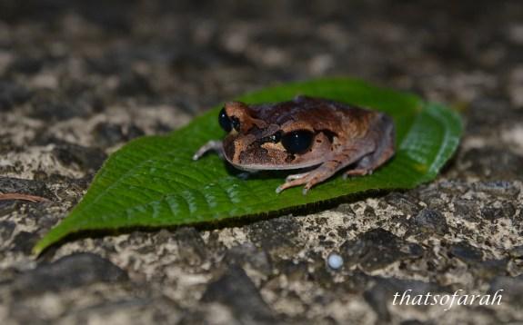 Frog Kubah National Park