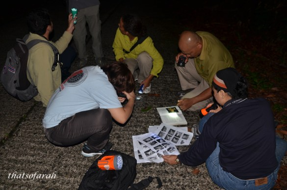 Frog research in Kubah National park