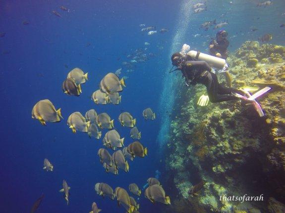Diving in Sipadan