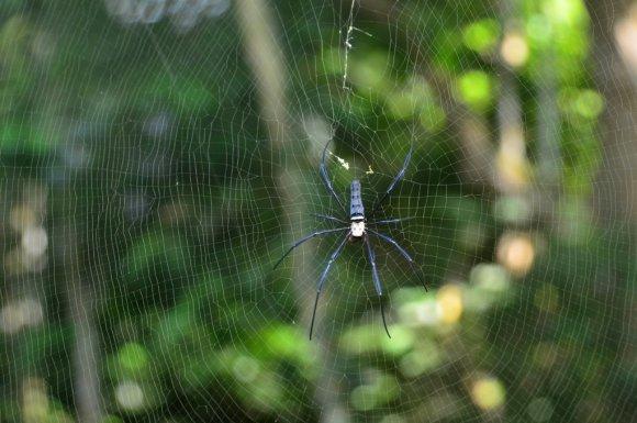 Spider near Fairy Cave