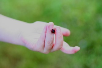 Misc-ladybug1