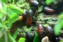Zoo-bugs3