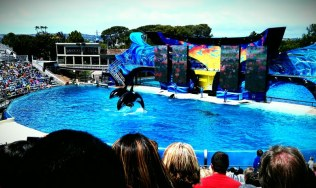 sea world 1