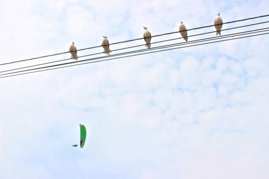 Lima_peru_seagulls
