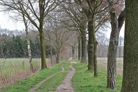 A typical Dutch walking path to the forest