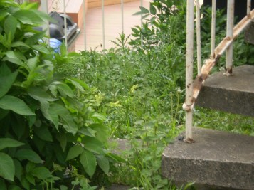 The overgrown spiral stairway