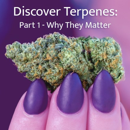 Teaching you about what terpenes are, what they do & what terpenes are present in cannabis.