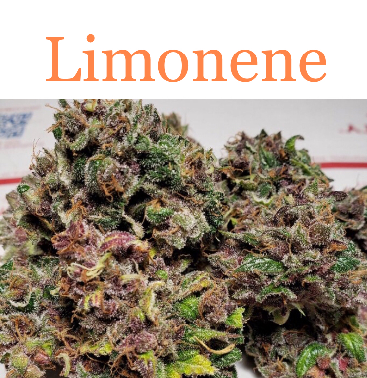 Limonene is a predominant cannabis terpene in Tangerine Dream.
