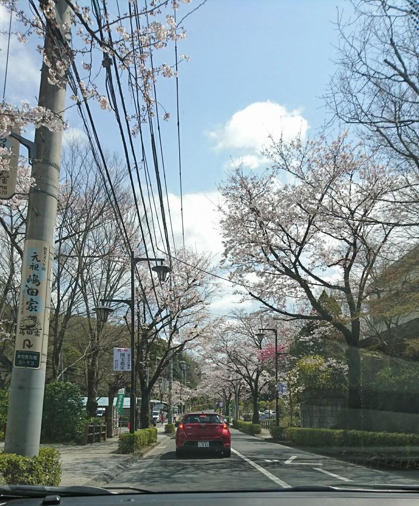 深大寺通の桜並木