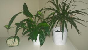 Lauras Plants
