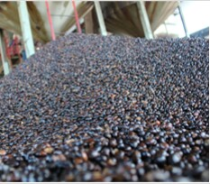 Palm Kernel In Nigeria
