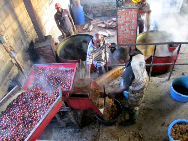 Feasibility Study: Palm Oil Processing