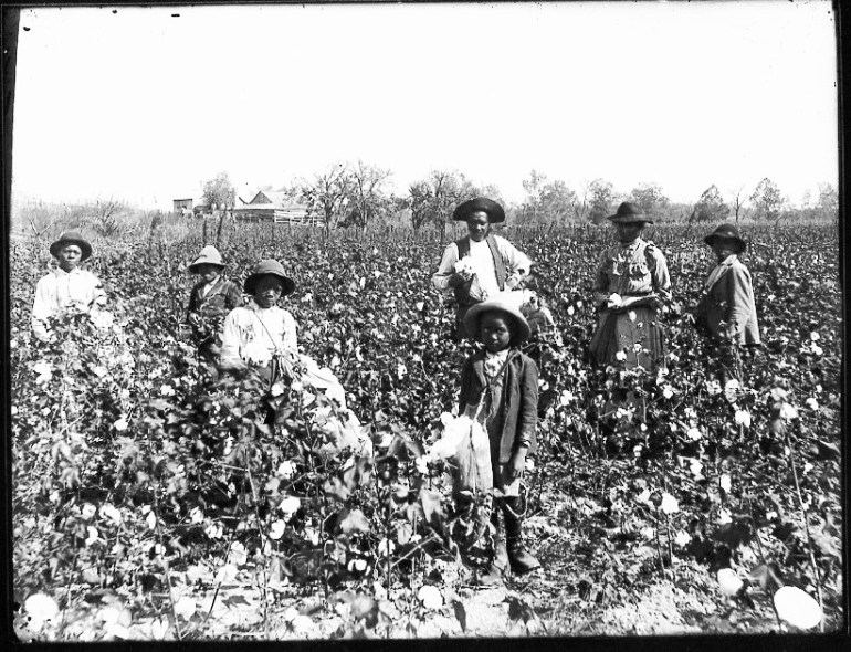 Black cotton farming family from the 1890s