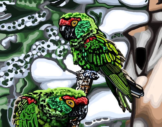 "Pamela Williamson ""Thick Billed Parrots"""