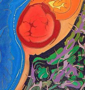 foetal aspienaut