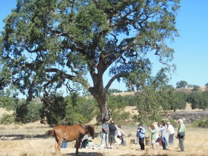 Drumming with Horses with Hidden Wings in Santa Ynez